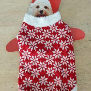 costume pour chien rouge et blanc